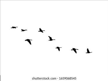 flock of birds design pattern print