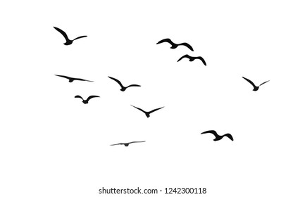 flock of birds fly. Vector