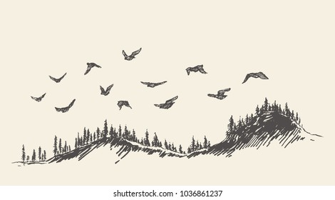 A flock of birds flying over a fir forest, vector illustration, hand drawn, sketch