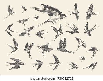A flock of birds, flying swallows, hand drawn vector illustration, sketch