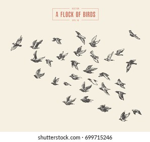 A flock of birds, hand drawn vector illustration, sketch