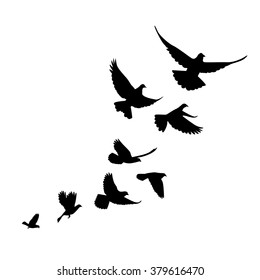 A flock of birds (pigeons) go up. Black silhouette on a white background.