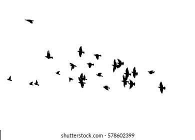Flock of birds silhouette. Vector