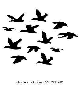 flock of black ducks flying on a white background