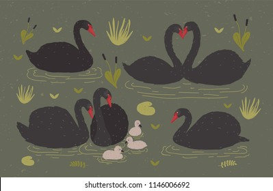 Flock of black swans and brood of cygnets floating together in pond or lake among water plants. Gorgeous wild birds, waterfowl. Flat colorful hand drawn vector illustration in cartoon style