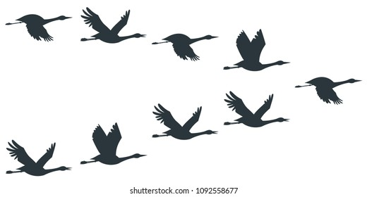 Flock of cranes or stork black silhouette in flying. Vector flat illustration of bird migration isolated on white background.
