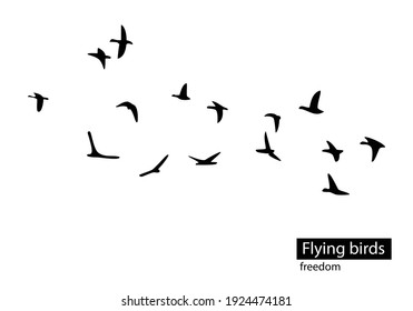 Flock of flying birds isolated on white background. Vector
