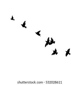 A flock of flying birds. starlings. vector