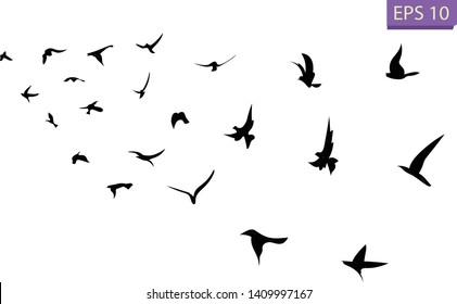 A flock of flying birds. Transparent background