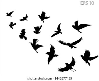 A flock of flying birds. Transparent background.