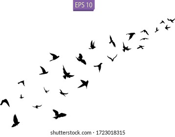 A flock of flying birds. Transparent background. Silhouette of flying birds. Black vector flying birds flock silhouette.