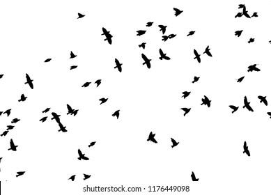 a flock of flying birds. Vector