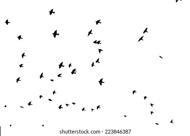 a flock of flying birds. Vector