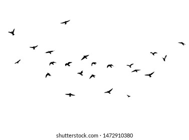 A flock of flying birds. Vector illustration