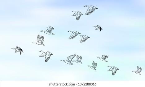 Flock of flying birds. Vector mesh background.