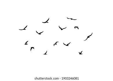 A flock of flying silhouette birds. Black on white background. Vector illustration