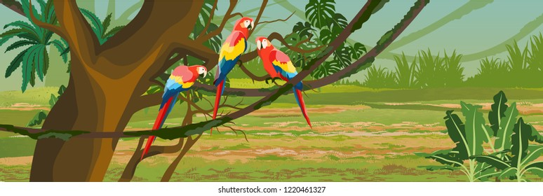 A flock of macaw parrots sitting on tropical trees. Jungle. Rainforest of South America and Amazonia. Creepers, banana trees, epiphytic ferns. Vector landscape