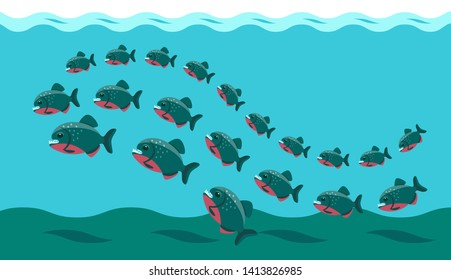 a flock of piranhas swims in the water