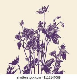Floral Background with black and white hand drawn herbs and wildflowers.  drawing style. vector illustration