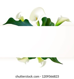 Floral background. Callas. Flowers. Petals. Border. Green leaves. Flower pattern. White.