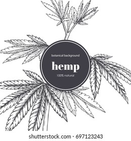 Floral background with engraved cannabis leaves. Vector botanical hand drawn illustration with hemp branch in sketch style.