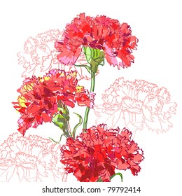 Floral background, greeting card. Carnation flowers.