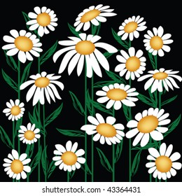 Floral background with oxeye daisy