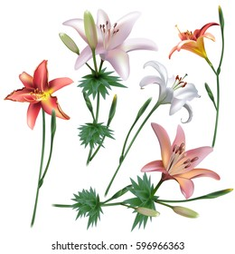 Floral background. Set of spring lilies for design purposes. Fully editable vector