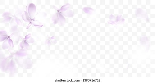 Floral background with soft pink lilac flower and petals vector transparent illustration template
