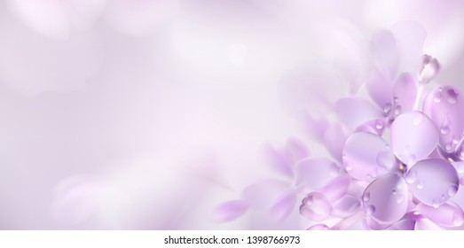 Floral background with soft pink lilac flower and petals vector illustration template