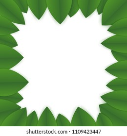 floral banner template. green leaves on white background. flyer for your advertisements. frame made of greenn petals
