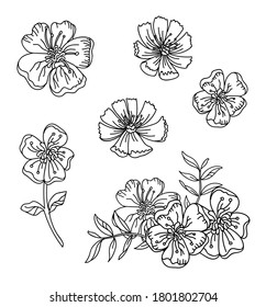Floral botanical set with hand drawn line art buttercup and cosmea flowers. Vector monochrome floral template illustration for wedding invitation,vegan cafe, flower shop logo, print, design, tattoo.