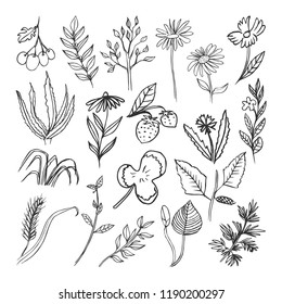 Floral collection with leaves , branches. Set of vector sketches isolated on white background
