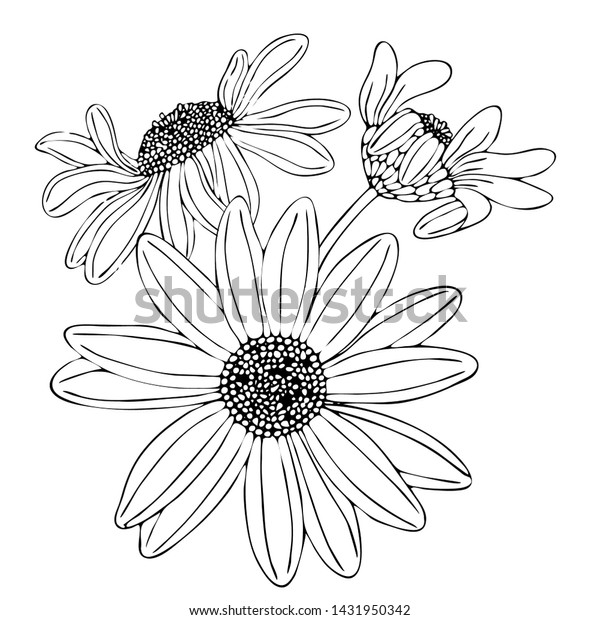 Floral Coloring Template Black Line Flower Stock Vector (Royalty Free)  1431950342