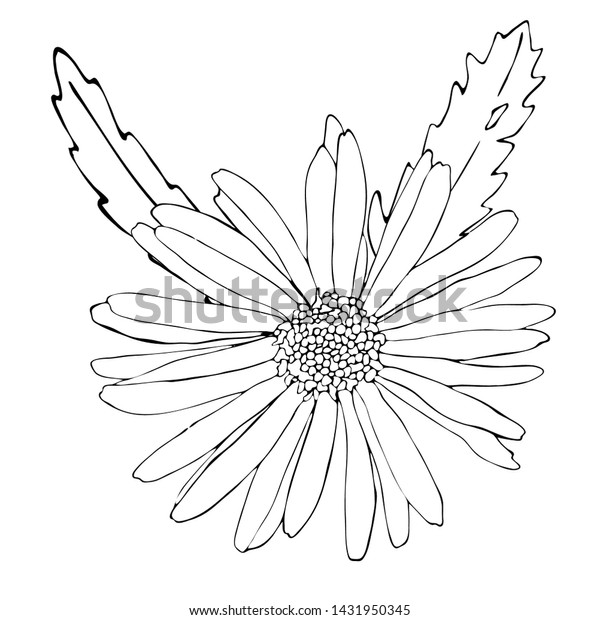 - Floral Coloring Template Black Line Flower Stock Vector (Royalty Free)  1431950345