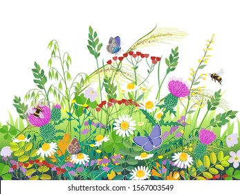 Floral composition made with summer meadow plants and insects. Grass, colorful wild flowers,  bumblebees and butterflies on white background.  Vector flat illustration.