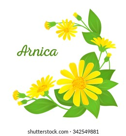 Floral composition with text. Branches of arnica with flowers, buds and leaves. Vector illustration for use in web design, print or other visual area.