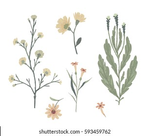Floral decorative elements. Botanical illustrations. Vector clip art.