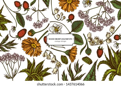 Floral design with colored aloe, calendula, lily of the valley, nettle, strawberry, valerian