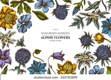 Floral design with colored bellflower, edelweiss, globethistle, globeflower, meadow geranium, gentiana