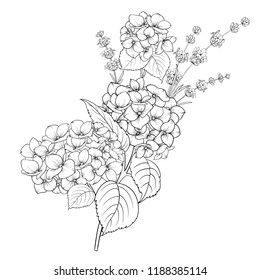 Floral design of lavender and hydrangea isolated over white background. Spring bouquet of flowers in line sketch style. Vector illustration