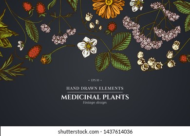 Floral design on dark background with aloe, calendula, lily of the valley, nettle, strawberry, valerian