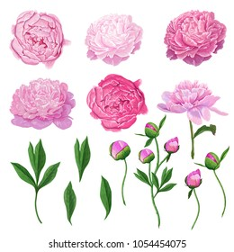 Floral Elements Set with Pink Peony Flowers, Leaves and Buds. Hand Drawn Botanical Flora for Decoration, Wedding Invitation, Patterns. Vector illustration