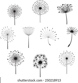 Floral Elements for you design with different  dandelions. Vector