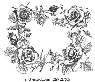 Black Roses Hand Draw Images Stock Photos Vectors Shutterstock