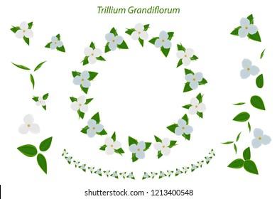 Floral garland, floral wreath. Trillium Grandiflorum. Large white trillium. Ohio state wild flower. Objects isolated on white background.