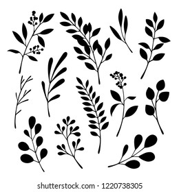 Floral graphic elements vector set. Flowers and plants hand drawn illustrations.