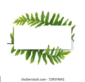 Floral modern vector card design: green Polypodiophyta fern frond leaves elegant greenery, forest wreath frame border print. Vector illustration, Wedding cute Invitation, invite template beauty design