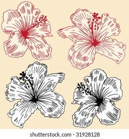 Floral Orchids