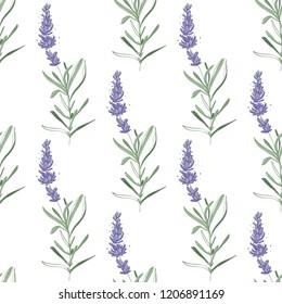 Floral seamless with lavender branch. Pattern or card design. Vector watercolor vintage sketch. Botanical colorful illustration on white background.